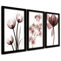 Trio Quadros Decorativos Raio x Flores Marrom