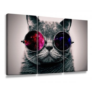 """Quadros Decorativos Gato de Óculos"